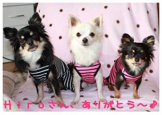 ★チワワン☆ハウス★-洋服3