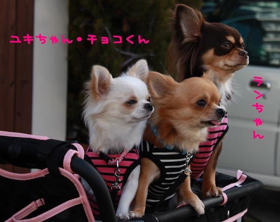 ★チワワン☆ハウス★-姉妹会3
