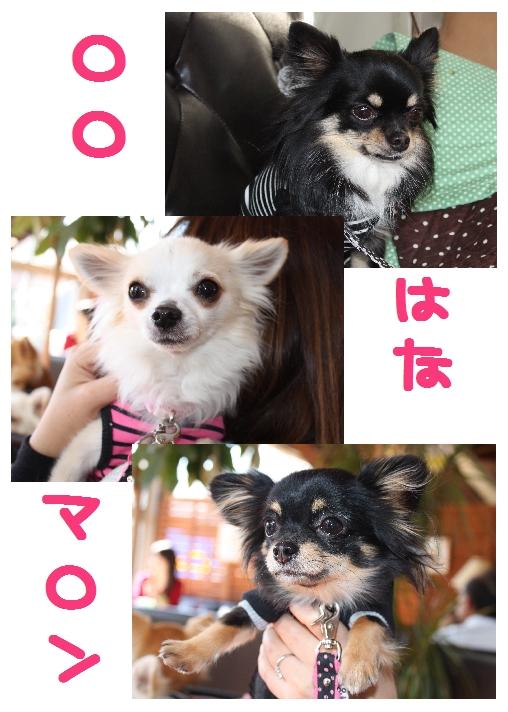 ★チワワン☆ハウス★-姉妹会2