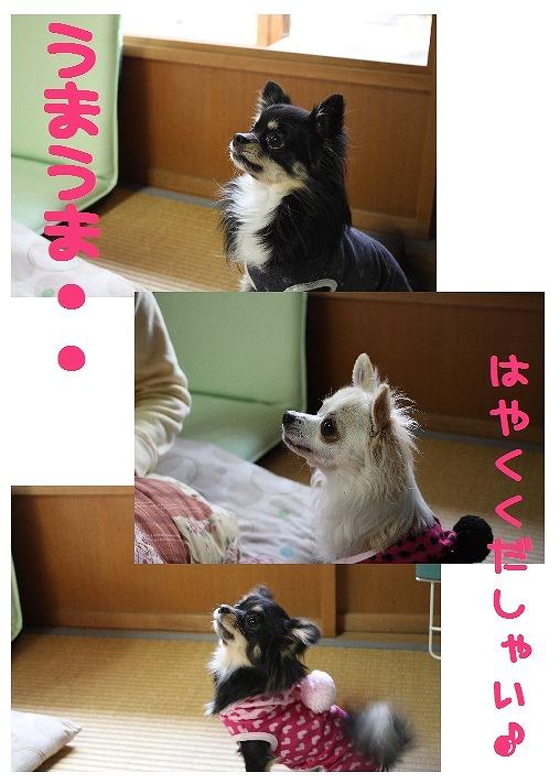 ★チワワン☆ハウス★-実家7