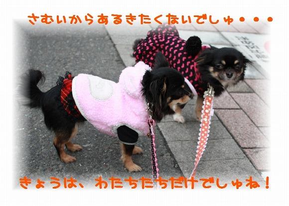 ★チワワン☆ハウス★-姉妹会1
