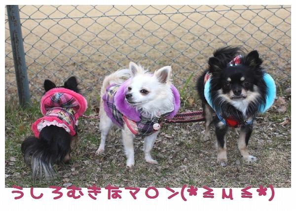 ★チワワン☆ハウス★-公園2