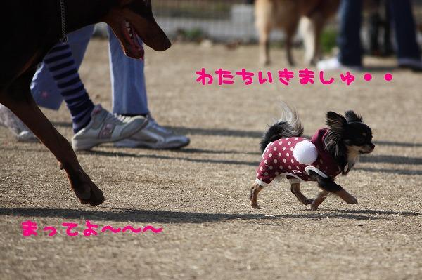 ★チワワン☆ハウス★-大間木9