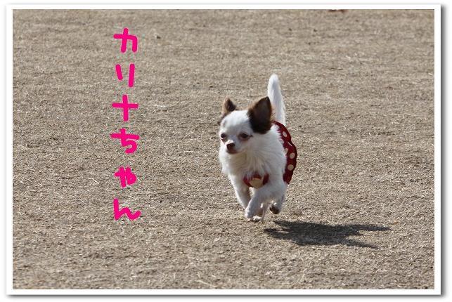 ★チワワン☆ハウス★-大間木4