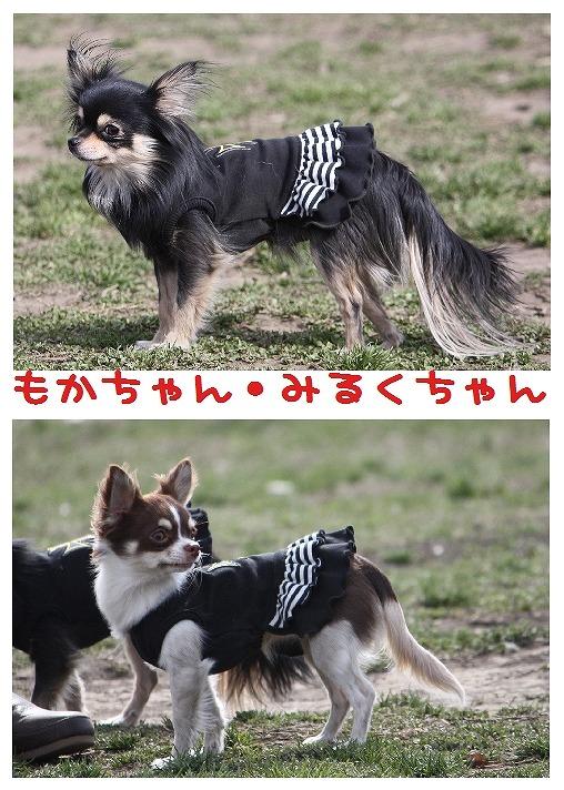 ★チワワン☆ハウス★-大間木1