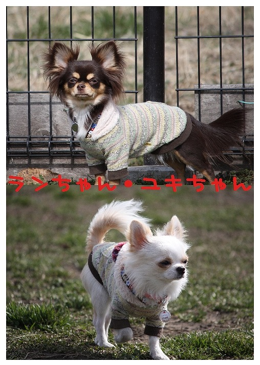 ★チワワン☆ハウス★-大間木2