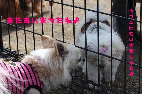 ★チワワン☆ハウス★-大間木3
