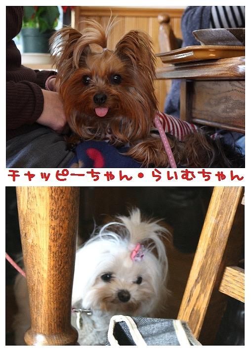 ★チワワン☆ハウス★-大間木10