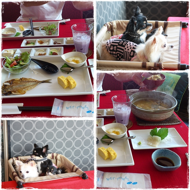cats_20110912152414.jpg