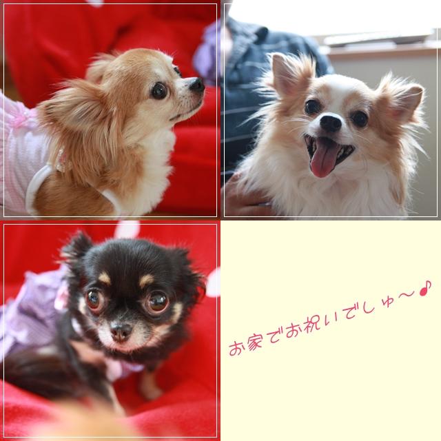 cats_20110921094119.jpg