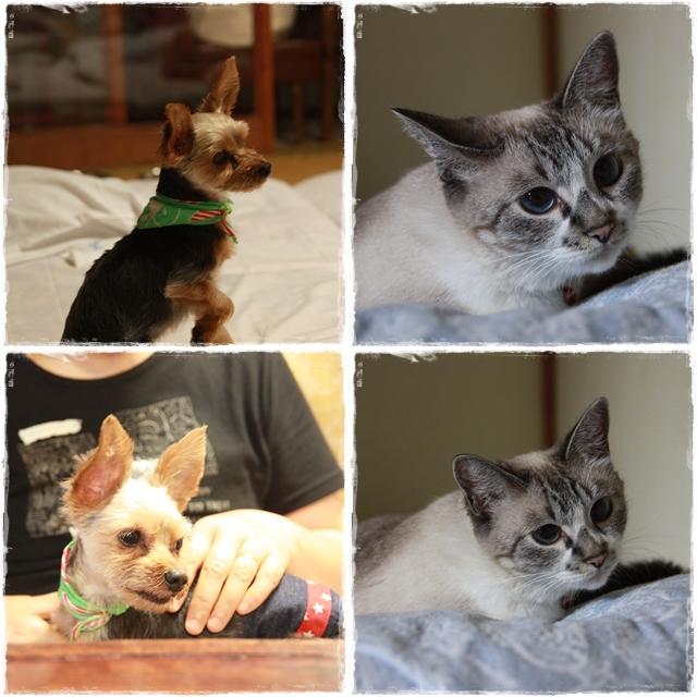 cats_20110929112158.jpg