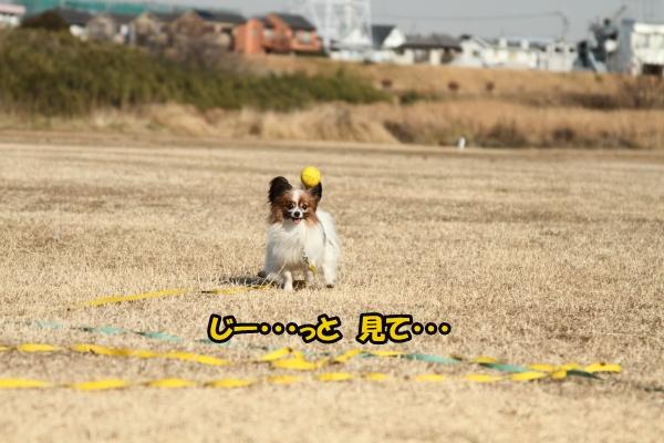 IMG_0896初宇奈根初宇奈根