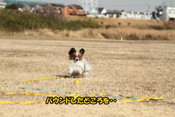 IMG_0897初宇奈根初宇奈根