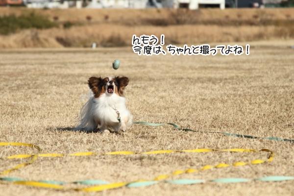 IMG_0911初宇奈根初宇奈根