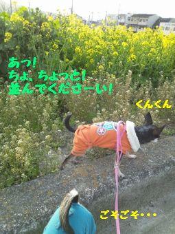 CameraZOOM-20120402171003212 (255x340)