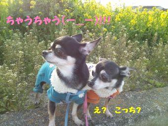 CameraZOOM-20120402171155429 (340x255)
