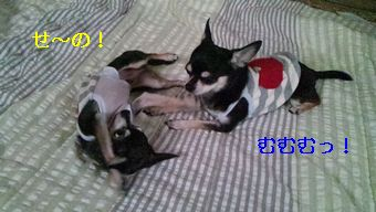 2012-07-06 07-09-04-079