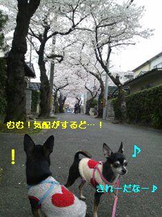 CameraZOOM-20120410162712795.jpg