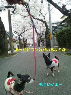 CameraZOOM-20120410162748584.jpg