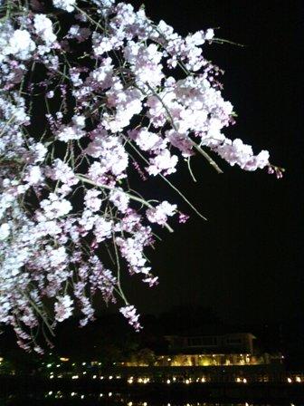 CameraZOOM-20120410201428046.jpg