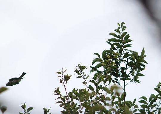 ezobitaki 10.09.20c