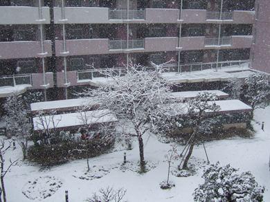 2/29 ベランダからの雪景色