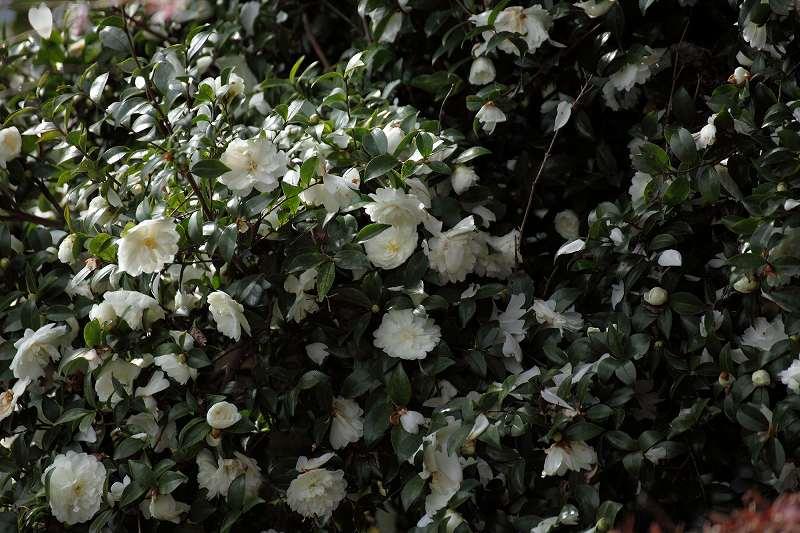 桜山201_2894