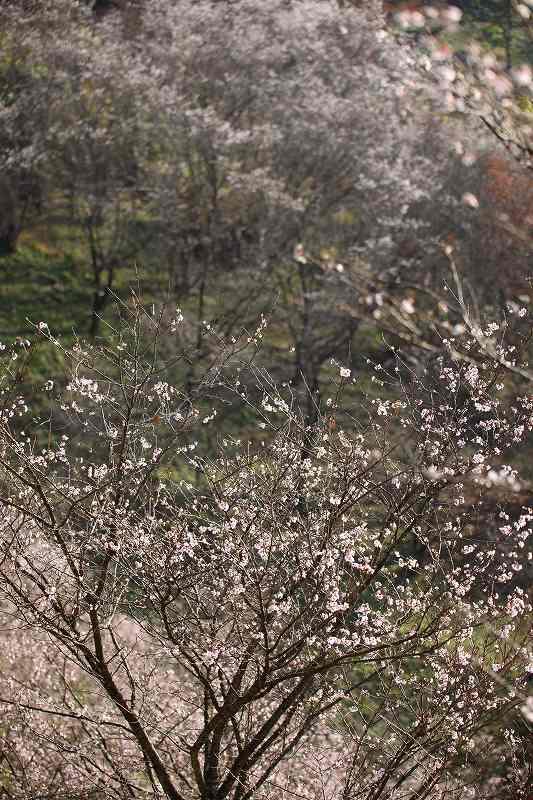桜山2011_2957