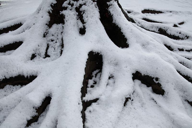 雪_0524