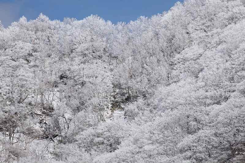 冬の赤城_3338