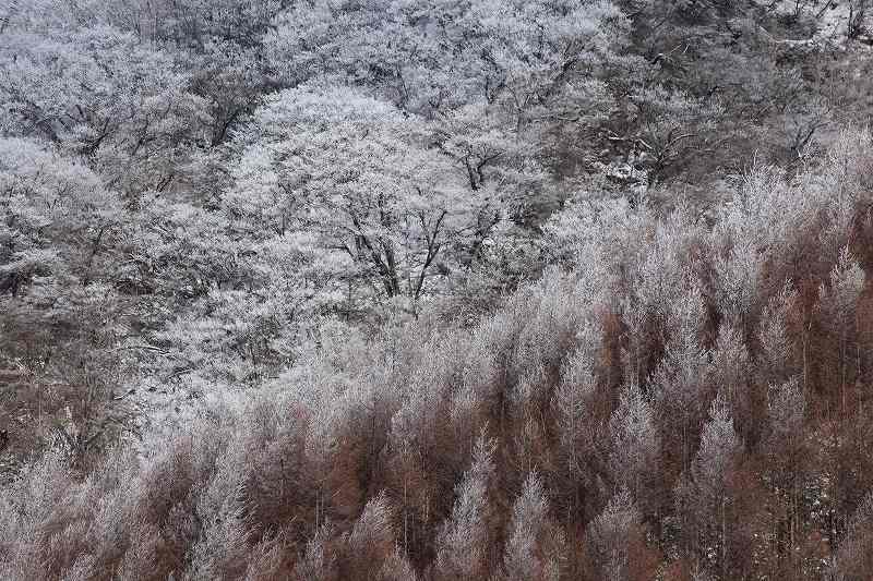 冬の赤城_3341