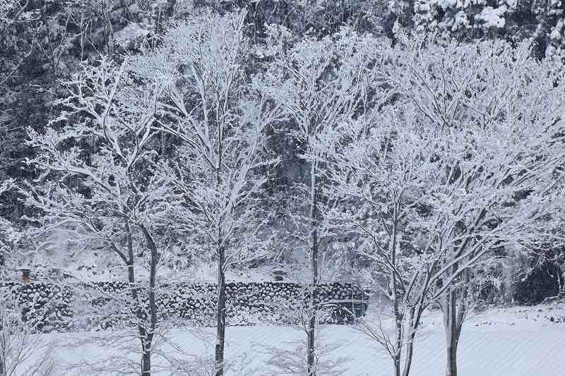 雪景_3518