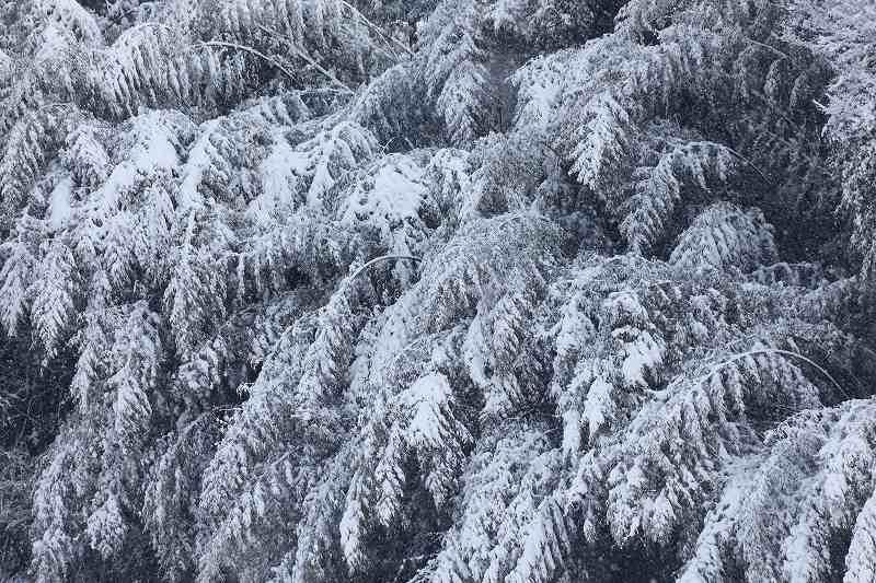 雪景_3517