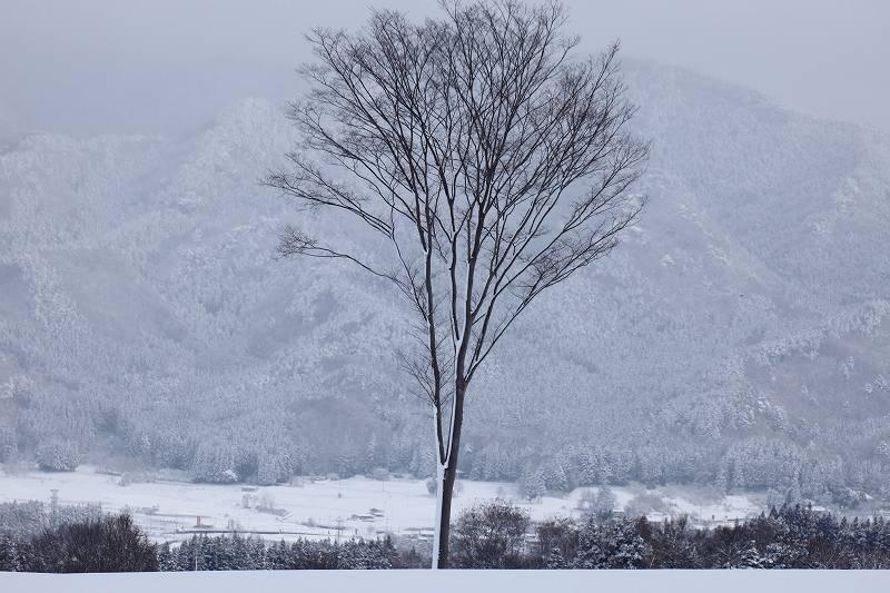 雪景_3532