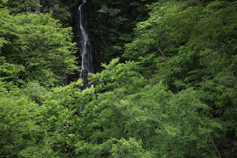不動の滝_2210