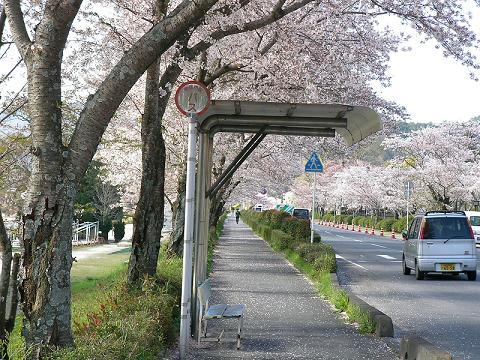 錦帯橋 006