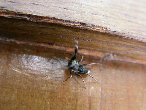 蜘蛛 002