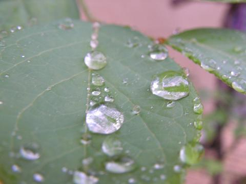 大雨 002