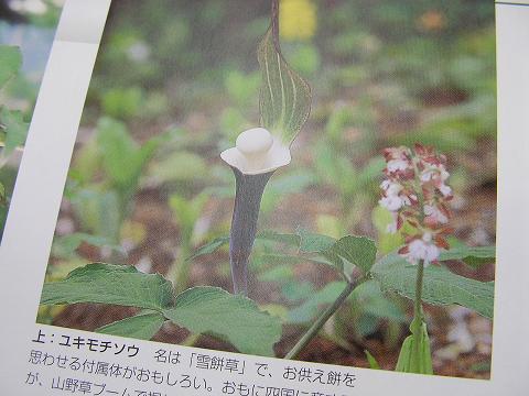 植物の本 002