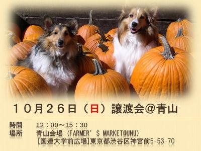10.26青山譲渡会ポスター