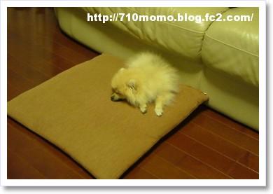 [frame19205486]P1030428