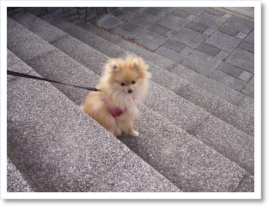 お散歩きらいなの?