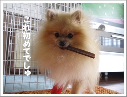 歯磨きガム