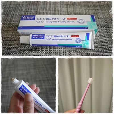 歯ブラシ&歯磨きペースト