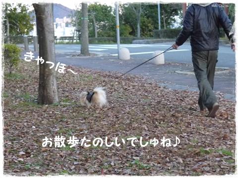 100日ぶりのお散歩