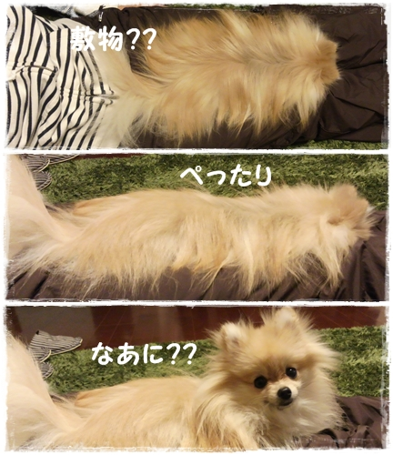 cats_20130108140700.jpg