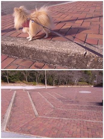 cats_20130111181535.jpg