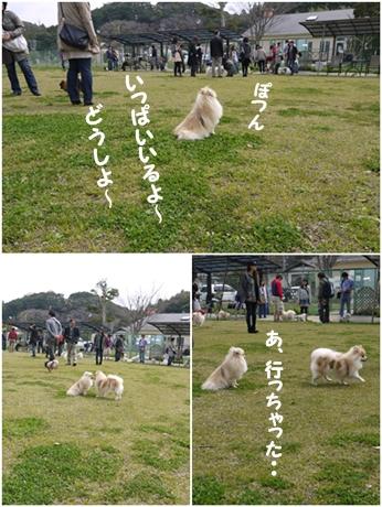 cats_20130325215217.jpg