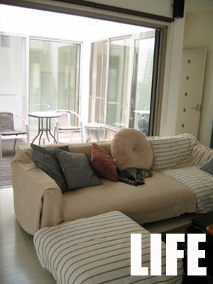 かわいそうなソファー