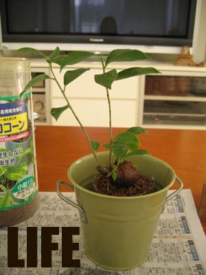 ジャングル化計画